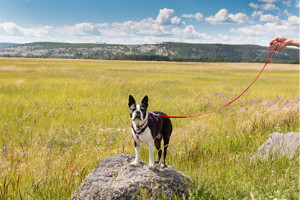 Pet Friendly in Grand Teton National Park